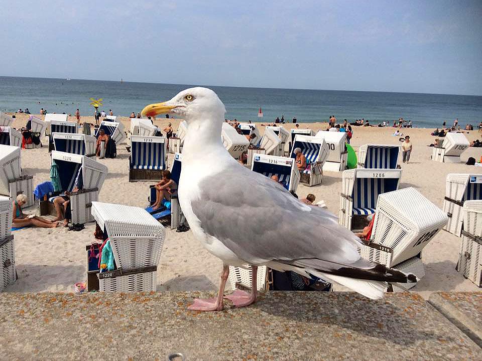 Möwe am Strand von Sylt